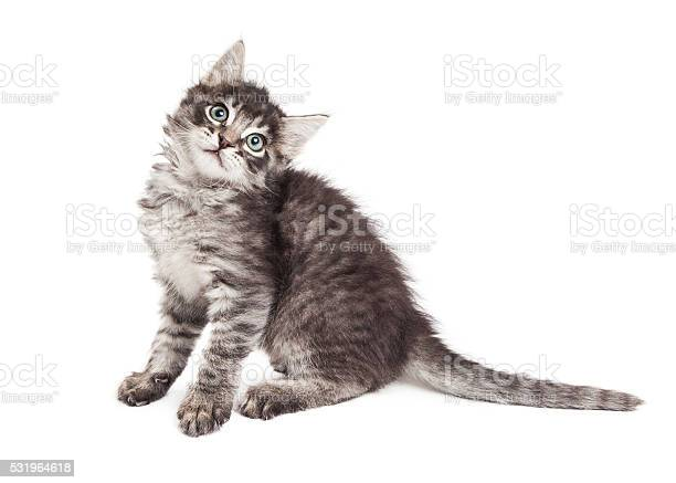 Cute kitten tilting head over white picture id531964618?b=1&k=6&m=531964618&s=612x612&h=u9 nh6v94aj4 dkwx1xnq2wb747567rx9baqzqo6mc4=