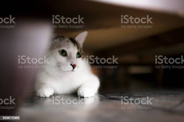 Cute kitten under the bed picture id939615988?b=1&k=6&m=939615988&s=612x612&h=y9ihfcsz22me36jcrtyb6dkvv6z2fqnnalqhclj6vl8=