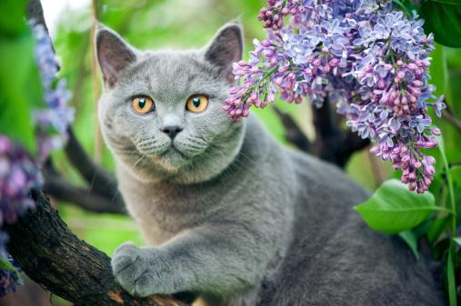 Cute kitten walking on a tree