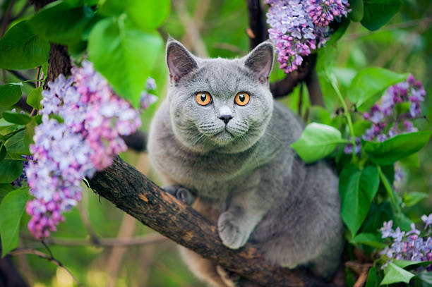 Cute kitten walking on a tree picture id136234087?b=1&k=6&m=136234087&s=612x612&w=0&h=qbumuzqf5sqxx  ozegu xncxrbonwcpvawn hvj dw=