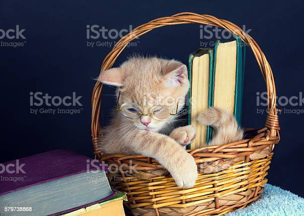 Cute kitten wearing glasses sitting in a basket with books picture id579738868?b=1&k=6&m=579738868&s=612x612&h= h 6e30cftnxsz2dghzc2xgopcnmampbkmohmoinuma=