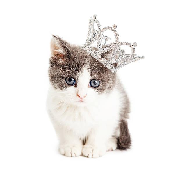 Cute kitten wearing princess crown picture id477389706?b=1&k=6&m=477389706&s=612x612&w=0&h=4m7yhy7gmbpjooqt4rjihnh2gdufpeh1csajf96ogpm=