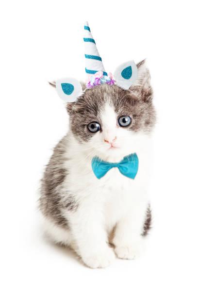 Cute kitten wearing unicorn halloween costume picture id1059334974?b=1&k=6&m=1059334974&s=612x612&w=0&h=kps48j1flf3mxubewmnrpmvmplbya i2cm7g vug5ve=