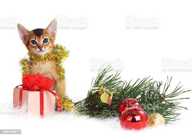 Cute kitten with christmas tree and gift box picture id459426877?b=1&k=6&m=459426877&s=612x612&h=5r5cw enepjrshwiwxtgu2l2svkhmuam1gfywzgoivo=