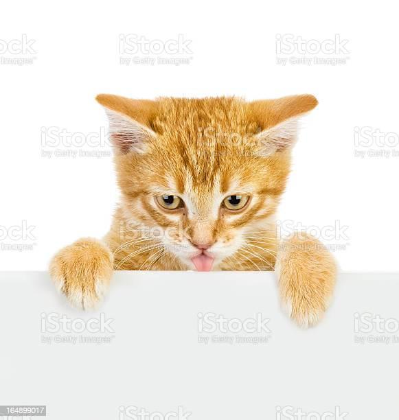 Cute kitten with empty board picture id164899017?b=1&k=6&m=164899017&s=612x612&h=f0hxorxm71frxauwfk1d7ovqplvngsj55wgzd3pafbu=