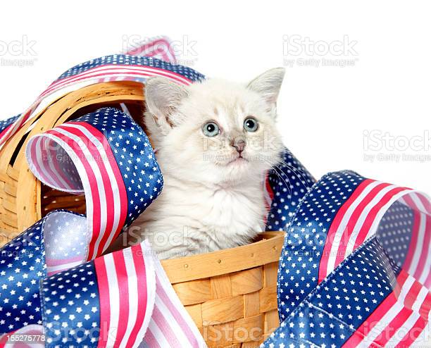 Cute kitten with fourth of july decorations picture id155275778?b=1&k=6&m=155275778&s=612x612&h=5i3rtmwr7b7wmrky0quix8yicbhyybmmyyj5 bsryku=
