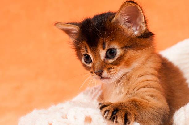 süße kätzchen mit paw - katzenhüte häkeln stock-fotos und bilder