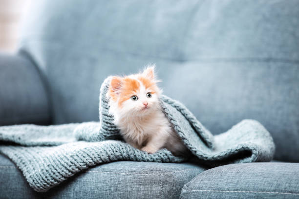 Cute kitten with scarf sitting on gray sofa picture id1129105973?b=1&k=6&m=1129105973&s=612x612&w=0&h=mi5aczegedqbgvtqhnt8bzgqlwe rzewhltt3jkk v4=