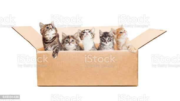 Cute kittens in a cardboard box picture id649094436?b=1&k=6&m=649094436&s=612x612&h=u1rgkcxsbl d11xdthu0vdoadpfeh3fccwms8b9shxs=