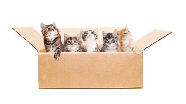 Cute kittens in a cardboard box picture id649094436?b=1&k=6&m=649094436&s=612x612&w=0&h=am5vvt8wtzvlp4l 4jzb5xrn2ez eiwzbosjqh6giee=