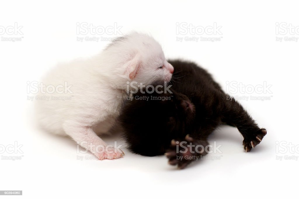 Cute kittens royalty-free stock photo