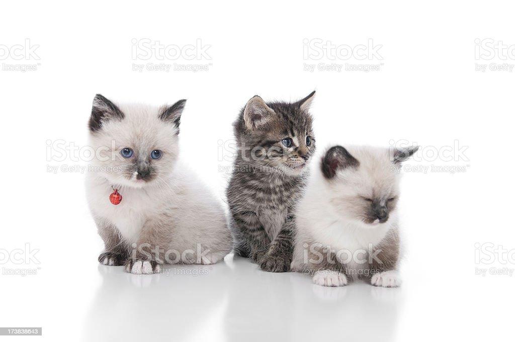 Cute Kittens Series royalty-free stock photo