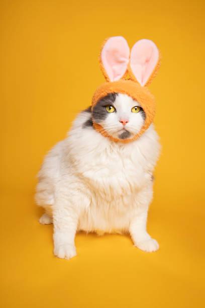 Cute Kitty Dressed as Bunny Rabbit stock photo