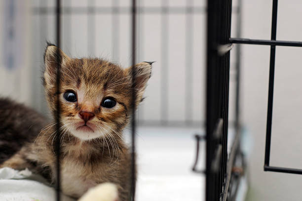 Cute Kitty In Cage stock photo