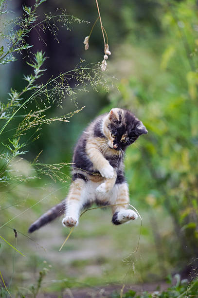 Cute kitty in funny jump picture id501137387?b=1&k=6&m=501137387&s=612x612&w=0&h=bztsi2duioo3jzagrhpf8rjixdnp4yyeozi6cewhyou=