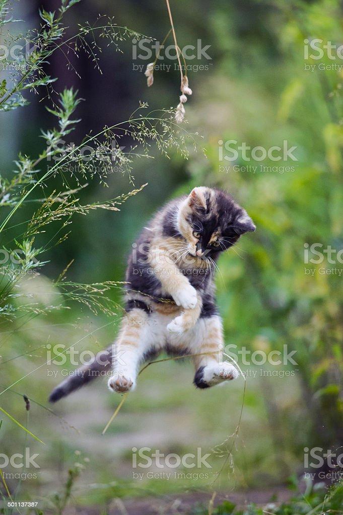 Süße Kätzchen in lustiger jump – Foto