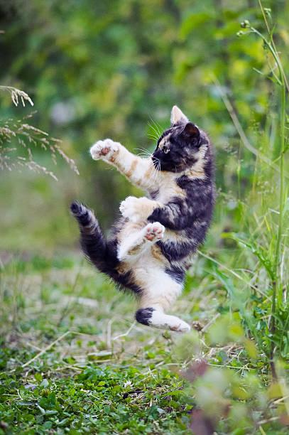 Cute kitty in karate style jump stock photo
