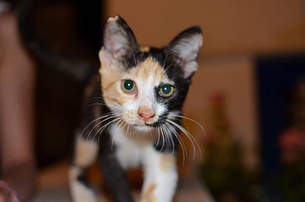 Cute Kitty looking at the camera stock photo