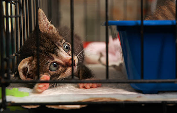 cute kitty stock photo
