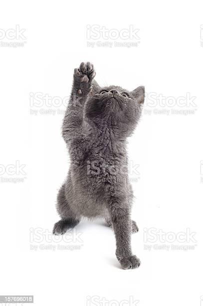 Cute kitty picture id157696018?b=1&k=6&m=157696018&s=612x612&h=apqy kuvmkvnys3zuekl0lou08v5jf ofbcyqx132qm=