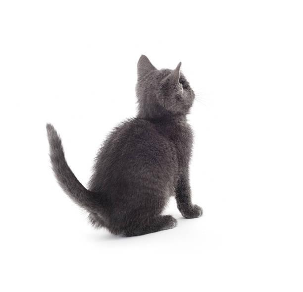 Cute kitty picture id183313130?b=1&k=6&m=183313130&s=612x612&w=0&h=dfgvuz cybzwf1om3lnctdxjdpx6xulfwz8r5u0jl6u=