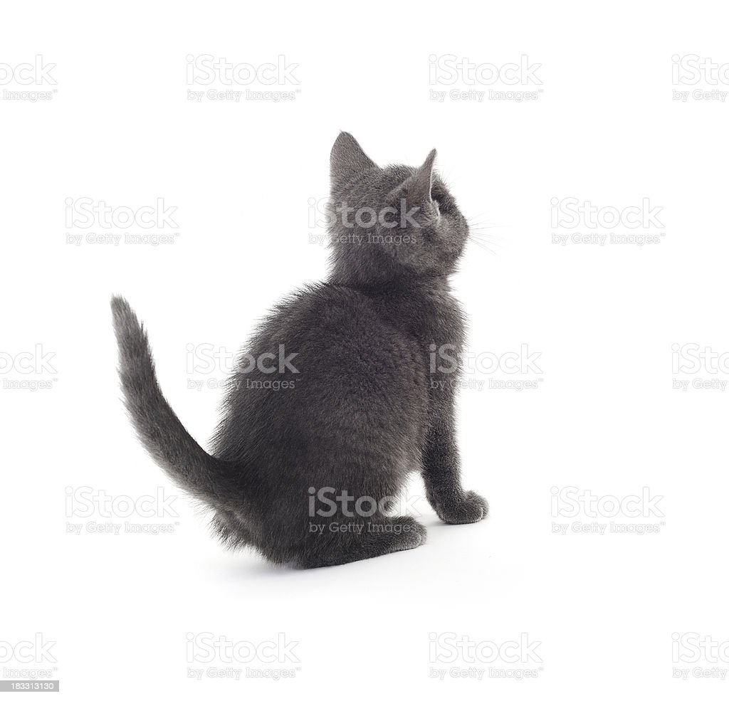 Cute Kitty stock photo