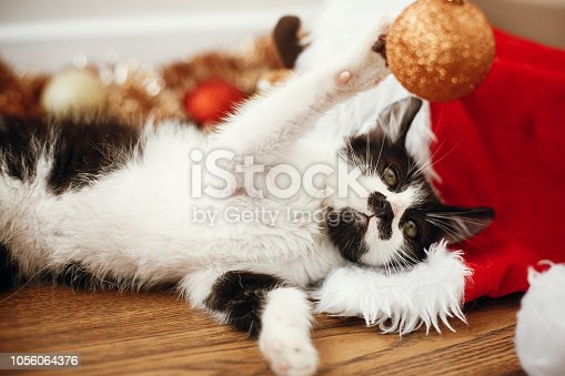 istock Cute kitty playing with gold baubles on floor at ornaments and santa hat under christmas tree in festive room. Merry Christmas concept. Adorable funny kitten. Atmospheric image 1056064376