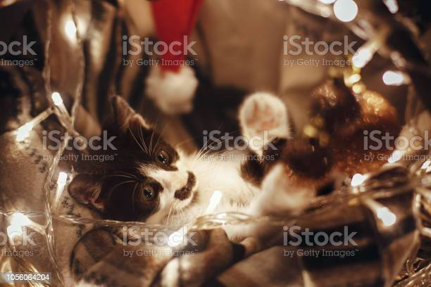 Cute kitty playing with ornaments in basket with lights under tree picture id1056064204?b=1&k=6&m=1056064204&s=612x612&h=xqjrov05n diwmzvjyk0bspatrcsfogpc5rxx4zyrb4=