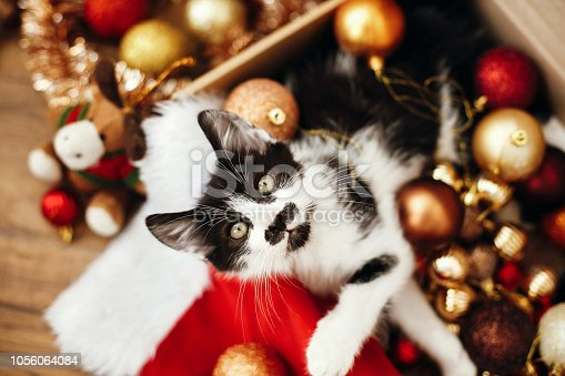 istock Cute kitty sitting in box with red and gold baubles, ornaments and santa hat under christmas tree in festive room. Merry Christmas concept. Adorable funny kitten witn green eyes 1056064084