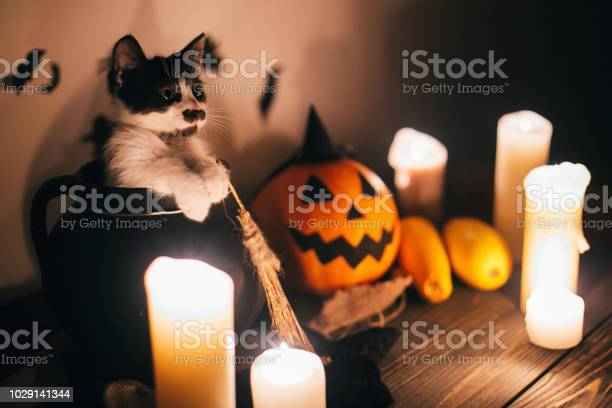 Cute kitty sitting in witch cauldron and jack o lantern pumpkin with picture id1029141344?b=1&k=6&m=1029141344&s=612x612&h=3j537waqjmmlf5udhfdbmubiv3xidjjki qsmdbx18k=