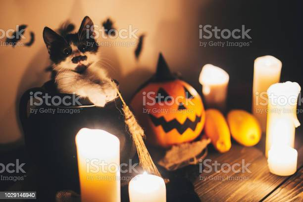 Cute kitty sitting in witch cauldron and jack o lantern pumpkin with picture id1029146940?b=1&k=6&m=1029146940&s=612x612&h=7jm3e rz4icor1ewt3vovq2l czbsnco4le0nxruj s=