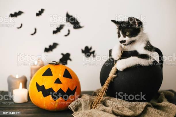 Cute kitty sitting in witch cauldron with jack o lantern pumpkin with picture id1029140982?b=1&k=6&m=1029140982&s=612x612&h=gneqbt uwp00chr c nczgqkdqfezseylctob8m1s38=