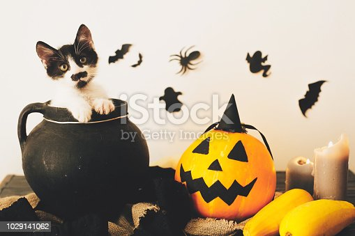 istock cute kitty sitting in witch cauldron with Jack o lantern pumpkin with candles, broom and bats, ghosts on spooky background. Happy Halloween concept. atmospheric image 1029141062