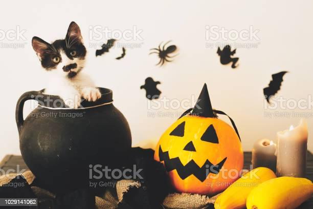 Cute kitty sitting in witch cauldron with jack o lantern pumpkin with picture id1029141062?b=1&k=6&m=1029141062&s=612x612&h=9gqnmjjszturqjvmgkpbqshtnq5jiqwioimlwjwvw a=