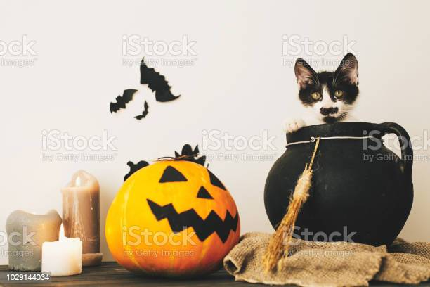 Cute kitty sitting in witch cauldron with jack o lantern pumpkin with picture id1029144034?b=1&k=6&m=1029144034&s=612x612&h=dxttwclhhbhyr0txfnhau fqgorsmn  soipnp61wqc=