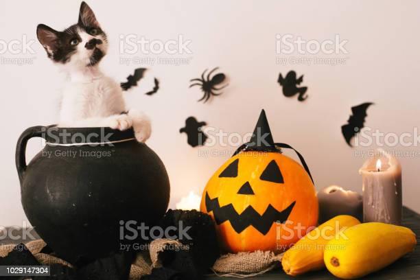 Cute kitty sitting in witch cauldron with jack o lantern pumpkin with picture id1029147304?b=1&k=6&m=1029147304&s=612x612&h=favyl3pk2nbro1dr00bgvtbibcps46u0ahygjsdfrjg=