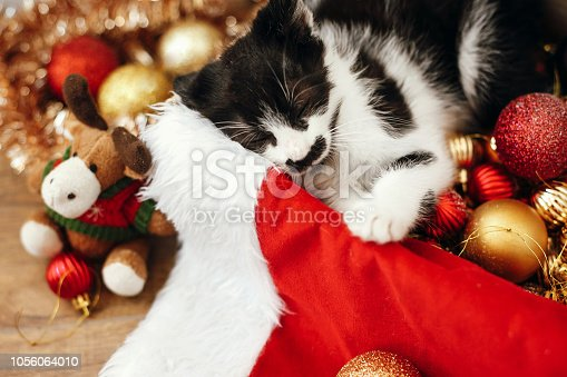 istock Cute kitty sleeping  in box with red and gold baubles, ornaments and santa hat under christmas tree in festive room. Merry Christmas concept. Adorable funny kitten. Atmospheric image 1056064010