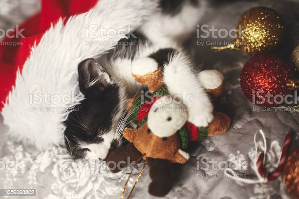 Cute kitty sleeping in santa hat with reindeer toy on bed with gold picture id1056063802?b=1&k=6&m=1056063802&s=612x612&h=5 rhuhol xvwhoscgppetxfczewade7fa4unv29rwjg=