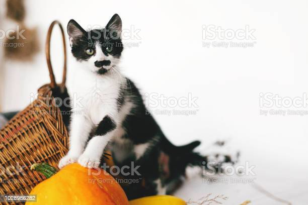 Cute kitty standing on pumpkin with funny look at cozy wicker basket picture id1028986282?b=1&k=6&m=1028986282&s=612x612&h=6fh2ypazzja 7yclrpjm6sumcle4goo75krqoqfvgow=