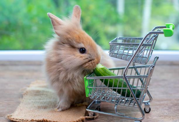 Cute light brown rabbit eat cucumber in shopping cart on wood table picture id1142389354?b=1&k=6&m=1142389354&s=612x612&w=0&h=hldcdivjynqeiabffy1ynlyozpf2oepaw htykqcqlw=