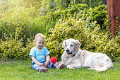 Cute liitle baby boy and Golden Retriever dog are playing with a red ball in the garden
