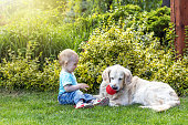 Cute liitle baby boy is playing with the Golden Retriever dog in the garden