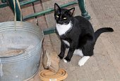 Sleepy Barn Cat next to a bucket curry comb and horse brush