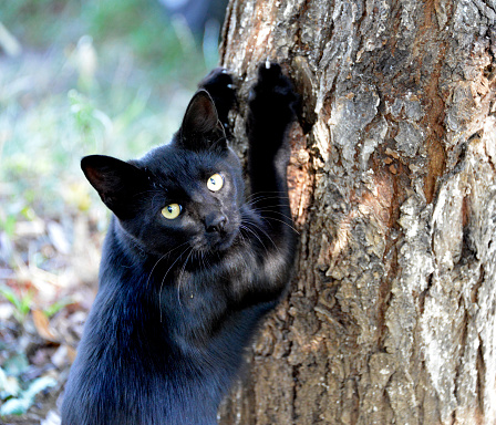Cute, little, black kitten climbing a tree