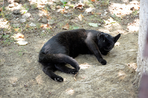 Cute, little black kitten is playing on the ground