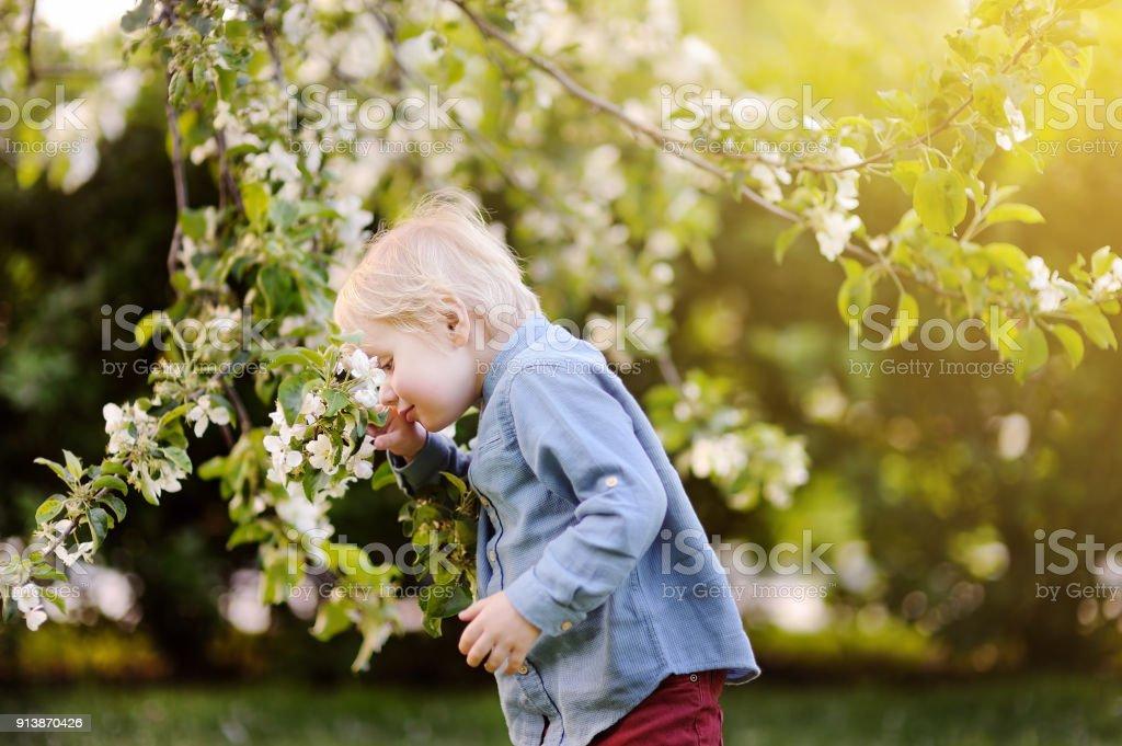 Niño lindo disfrutar floreciente árbol con flores blancas en el jardín doméstico en día cálido - foto de stock