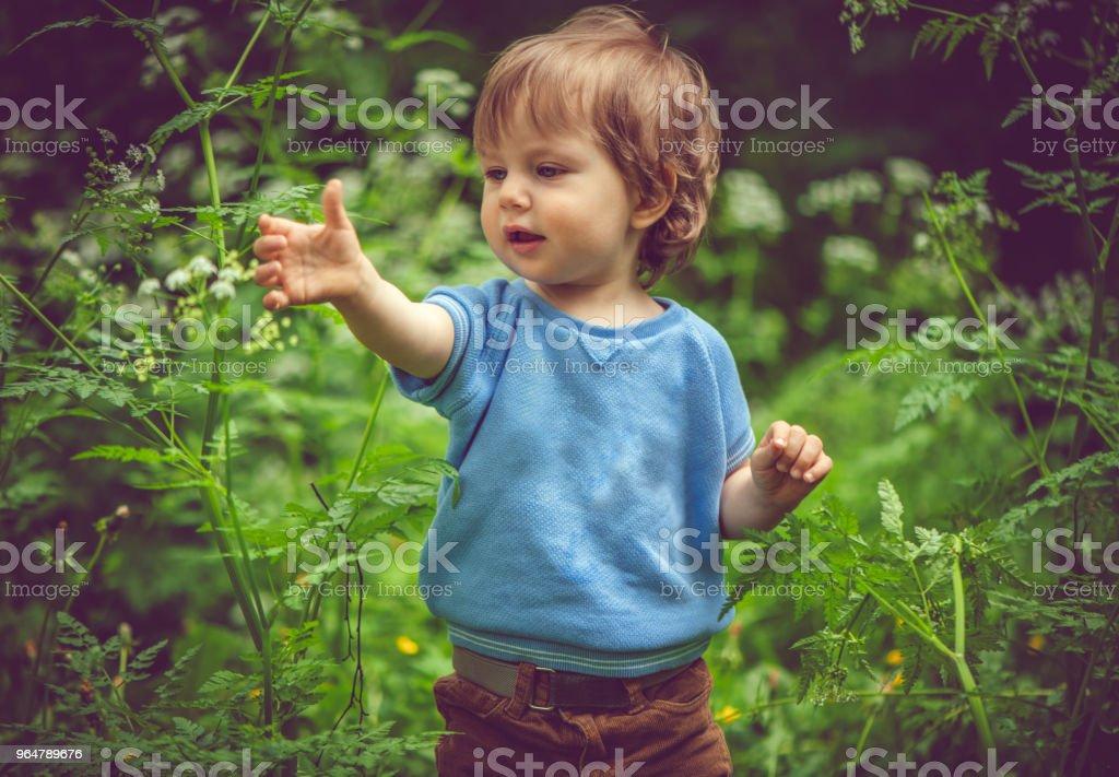 Cute little boy enjoying summer outdoors royalty-free stock photo