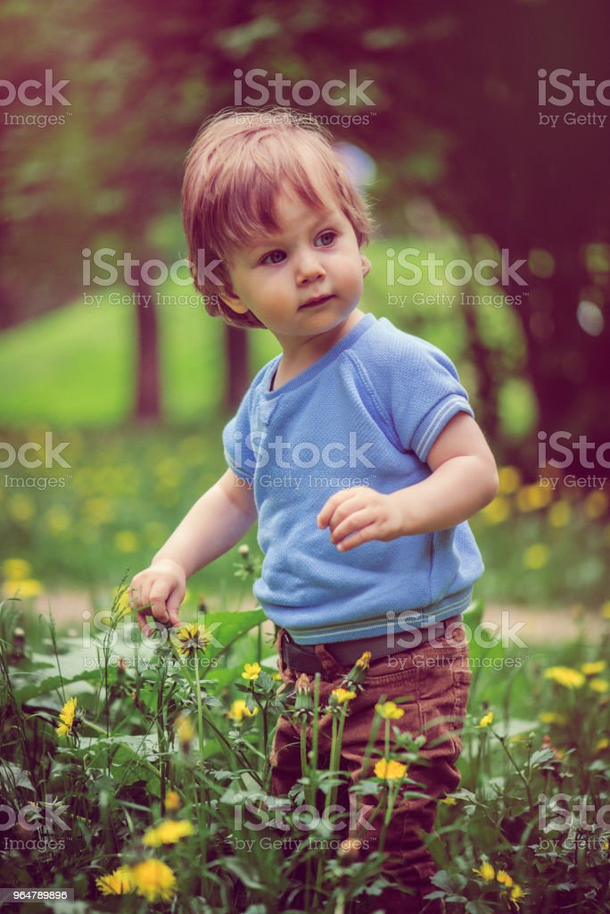 Cute little boy enjoying summer outdoors royalty-free stock photo