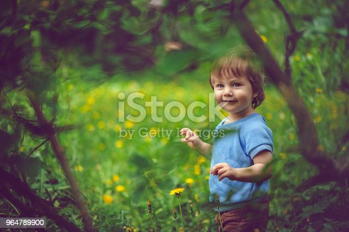 Cute Little Boy Enjoying Summer Outdoors Stock Photo & More Pictures of Agricultural Field