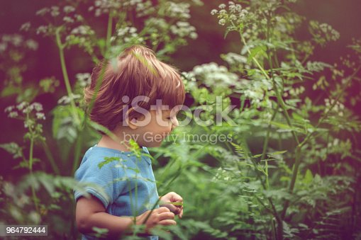 Cute Little Boy Enjoying Summer Outdoors Stock Photo & More Pictures of Baby